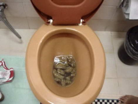 dutch toilet porn