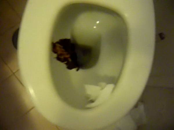 girls toilet pooping